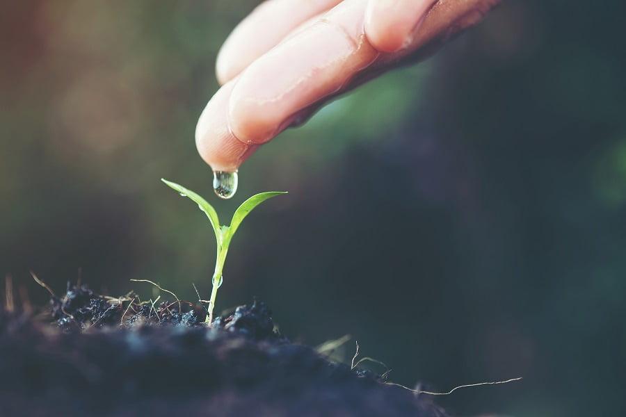 رشد نهال رسالت زندگی