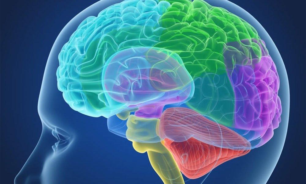 تاثیر شکرگزاری بر مغز