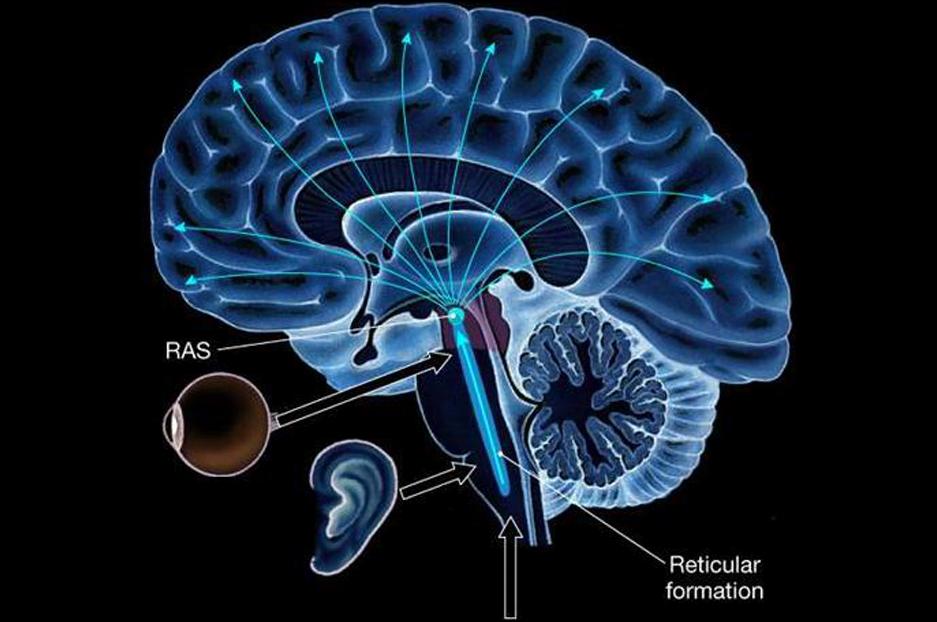 تاثیر شکرگزاری بر RAS مغز